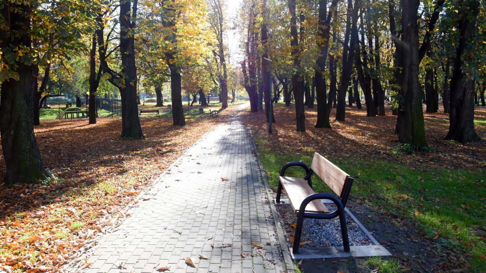 Alejka w parku, na pierwszym planie nowa ławka